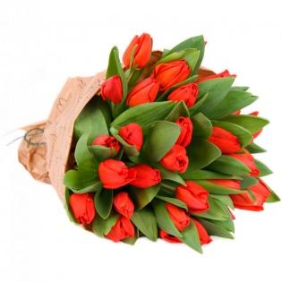 Тюльпаны красные (за шт)
